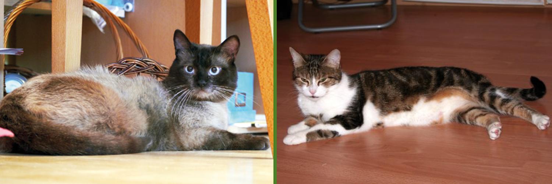 Eigenständige Katzen suchen neue Heimat